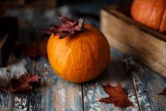 Orange Halloween-Kürbise auf hölzernem Hintergrund Herbstzusammensetzung mit Kürbisen Ein grimmiger Minireaper, der eine Sense an lizenzfreies stockbild