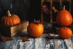 Orange Halloween-Kürbise auf hölzernem Hintergrund Herbstzusammensetzung mit Kürbisen Ein grimmiger Minireaper, der eine Sense an lizenzfreie stockfotos