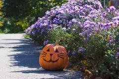 Orange halloween pumpkin cat  in a purple flowers Stock Photo