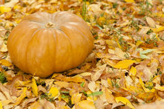 Orange halloween pumpkin on golden leaves. Orange halloween pumpkin on golden autumn leaves Royalty Free Stock Image