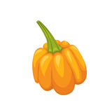 Orange halloween pumpkin  illustration. Simple vector. White isola Royalty Free Stock Image