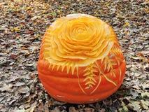 Orange halloween pumpkin - rose Stock Image