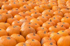 Orange Halloween pumpkins Stock Photo