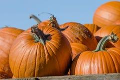 Orange halloween pumpor på skärm Arkivbild