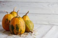 Orange halloween pumpor på vita plankor Royaltyfria Foton