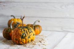Orange halloween pumpor på vita plankor Royaltyfri Fotografi
