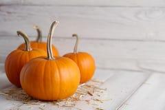 Orange halloween pumpor på vita plankor Royaltyfri Bild