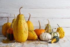 Orange halloween pumpor på vita plankor Royaltyfri Foto