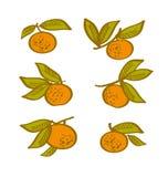 Orange hand drawn element. Royalty Free Stock Image