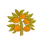 Orange hand drawn element. Stock Photos