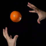 Orange and hands. An orange is magically hold between two hands Stock Images