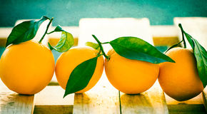 Orange Harvest Royalty Free Stock Photos