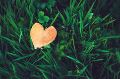 Orange heart-shaped leaf lying on fresh green grass, autumn background. Symbol fall concept, red love. Rustic style nature wallpaper Royalty Free Stock Photography