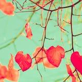 Orange hearts Royalty Free Stock Image
