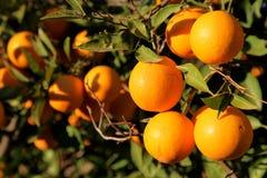 Orange Heaven Royalty Free Stock Images