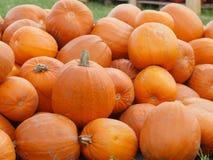 Orange Helloween-Kürbise draußen Stockfoto