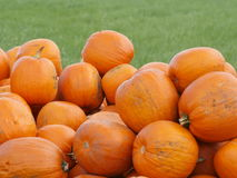Orange Helloween pumpor utomhus Royaltyfri Bild