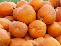 Orange Helloween pumpor utomhus Arkivbilder