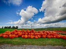 Orange Helloween pumpor utomhus Fotografering för Bildbyråer