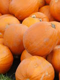 Orange Helloween pumpor utomhus Arkivbild