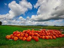 Orange Helloween pumpor utomhus Arkivbild