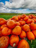 Orange Helloween pumpor utomhus Royaltyfria Bilder