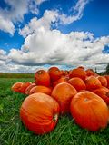 Orange Helloween pumpor utomhus Arkivfoton