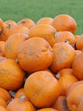 Orange Helloween pumpor utomhus Royaltyfri Foto