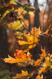 Orange Herbst Stockfotos