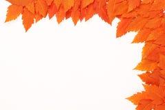 Orange Herbst gefallene Blätter auf weißem Hintergrund Stockbild