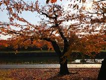 Orange Herbst unter dem Sonnenlicht vom Osten stockfoto