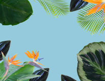 Orange hibiscus flower. Tropical flowers and leaves - border of fresh strelizia bird of paradize flowers and exotic palm leaves on blue background Stock Photo