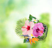 Orange hibiscus flower Royalty Free Stock Images