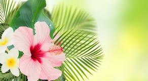 Orange hibiscus flower Royalty Free Stock Images