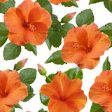 Orange hibiscus flowers seamless pattern Stock Images