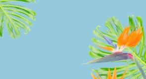 Orange hibiskusblomma royaltyfri illustrationer