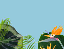 Orange hibiskusblomma vektor illustrationer