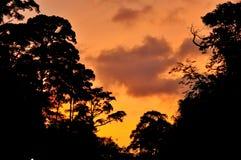 Orange Himmel mit Schattenbild Bäumen Stockbilder