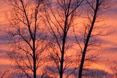 Orange himmel- och kontrasterafilialer av träd arkivfoton