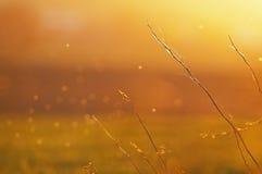 Orange Hintergrund Stockbilder