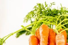 Orange Hintergrund des carrots Stockbilder