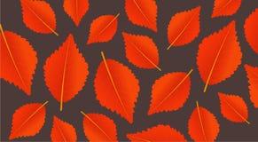 Orange Hintergrund des Herbstes mit Blättern Modernes Muster für Einkaufsverkauf, Promoplakat oder Netzfahne Abbildung Lizenzfreies Stockbild