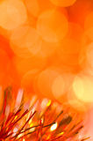 Orange holiday background Royalty Free Stock Image