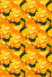 Orange honey roses wallpaper Stock Photography