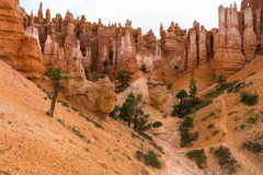 Orange hoodoo rocks in Bryce Canyon Royalty Free Stock Images