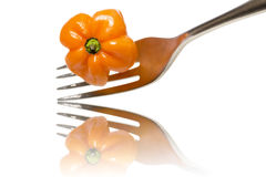 Orange hot chili on a fork with reflection Stock Image