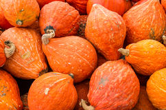 Orange hubbard squash at market Royalty Free Stock Image