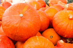 Orange hubbard squash at market Stock Image