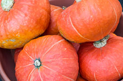 Orange hubbard squash for sale at the market Royalty Free Stock Image