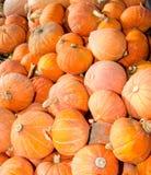 Orange hubbard winter squash Stock Photo